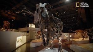 T. Rex, il grande combattente foto