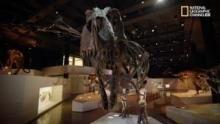 T. Rex, il grande combattente programma