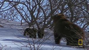 היום הראשון של הגורים בחוץ קטע וידאו