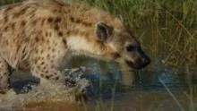 Gli animali più pericolosi dell'Africa programma