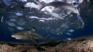 Paura degli squali? foto