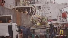 5 вещей о нелегальной торговле слоновой костью программа