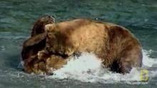 Bärenstark - bis aufs Blut Programm