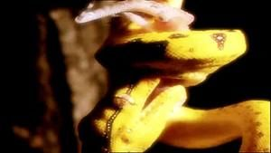 Snake photo