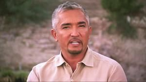 Cesar Millan Q&A part 1 photo