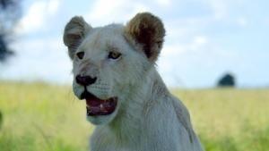 Wildtiere vor der Kamera Foto