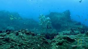 Undersea Life photo
