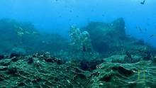 Podmořský život pořad
