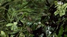 Le mamba noir, un serpent redoutable Voir la fiche programme