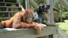Tierische Freundschaften - Trailer Programm