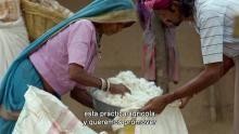 Cambiando el algodón Serie