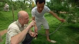 The deadly Malayan krait photo