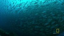 El edén de los tiburones Serie