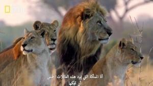 المملكة المتوحشة صورة