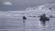 القارة 7: أنتاركتيكا برنامج