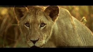 حیات وحش عکس