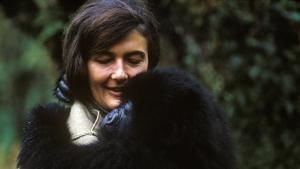 Who is Dian Fossey? photo