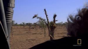 Cheetah Fight photo