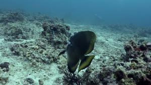 Thresher Shark Encounter photo