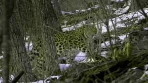 Den hemmelige skov Premiere Billed