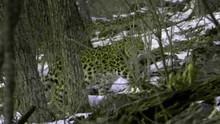 Den hemmelige skov Premiere Program