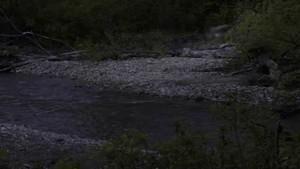Den hemmelige skov Blakistons fiske ugler Billed