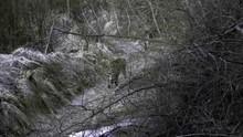 Den hemmelige skov Amur leopard Program