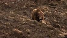 Kamchatka jordskred Program