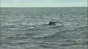 "30""TV: Problematisk fiskeri Billed"
