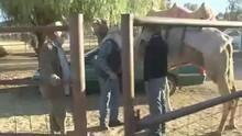 Kamel träning program
