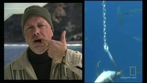 Web episode: Den store hvithaien Bilde