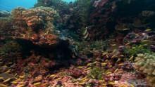 Récifs coralliens Voir la fiche programme