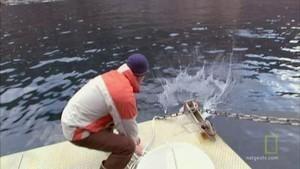 De grootste witte haai Foto