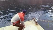 De grootste witte haai Programma