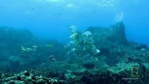 Underwater Oasis Foto