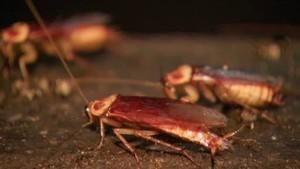 Vleermuizen en kakkerlakken in Borneo Foto