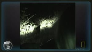 Noční lov fotografie