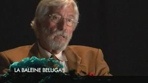 Interview - La baleine béluga photo