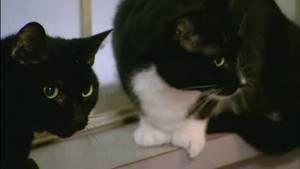 Web episode: En kattehamstring situasjon Bilde