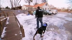 Web episode: Nike the Rottweiler's Aggression photo