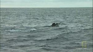 Horgász a pácban fotó