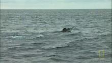 Horgász a pácban film