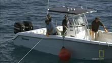 Bója-hozta cápa film