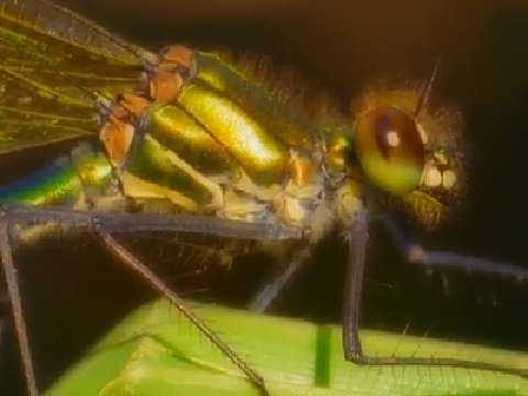 Flying Insects That Kill