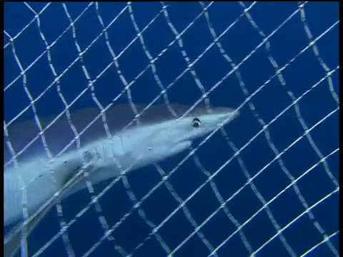 Man wrestles shark underwater