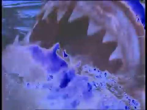 How strong is a shark&#039;s bite?