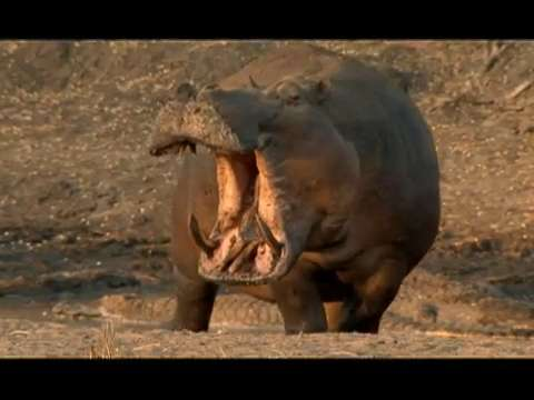 Canoer attacked by hippo