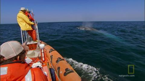 Tracking Blue Whale Migrations